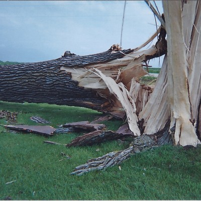 Tree Destroyed by Storms June 2008